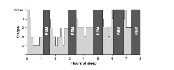 Исследование попыток дневного сна (МТЛС)