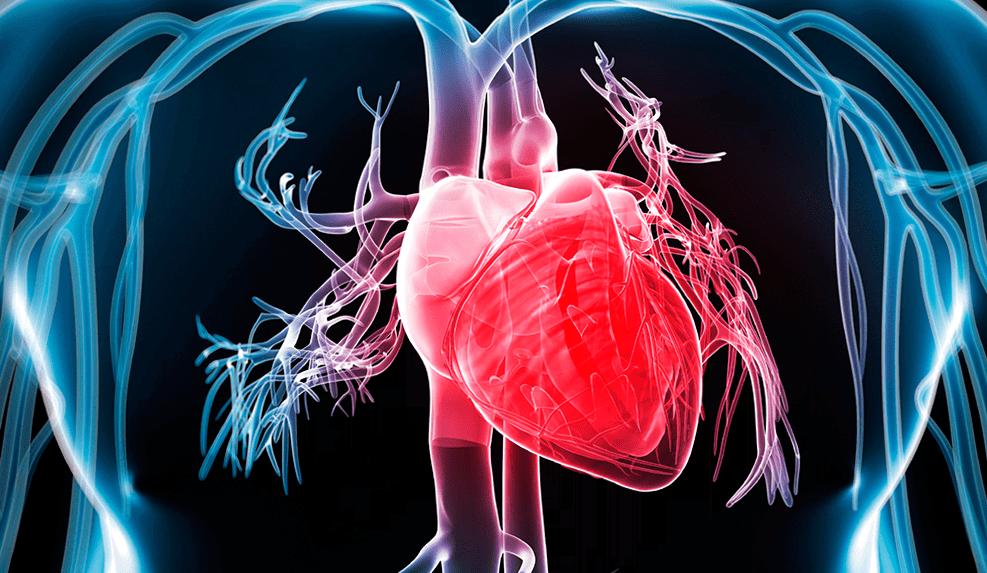 Взаимосвязь процесса сна, расстройств сна и заболеваний сердца